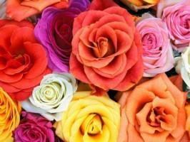 Символика на розите