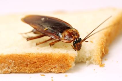 пръскане хлебарки
