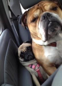 15 снимки на забавни кучета