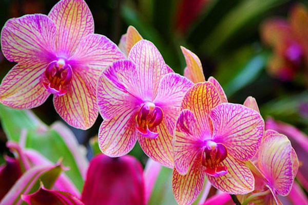 Болести и вредители по орхидеите и борбата с тях