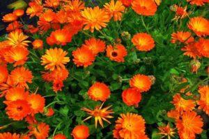 растителна защита