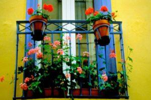 цветята в дома