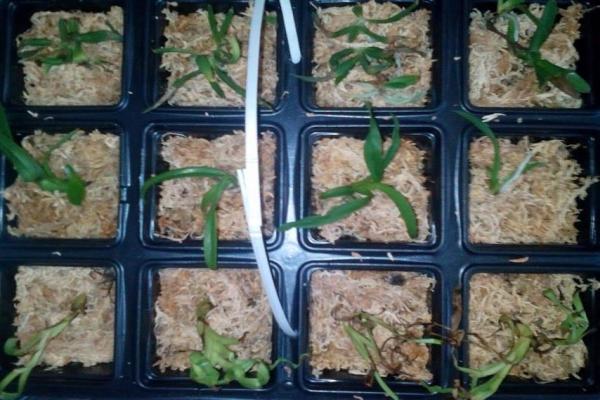 малки орхидеи