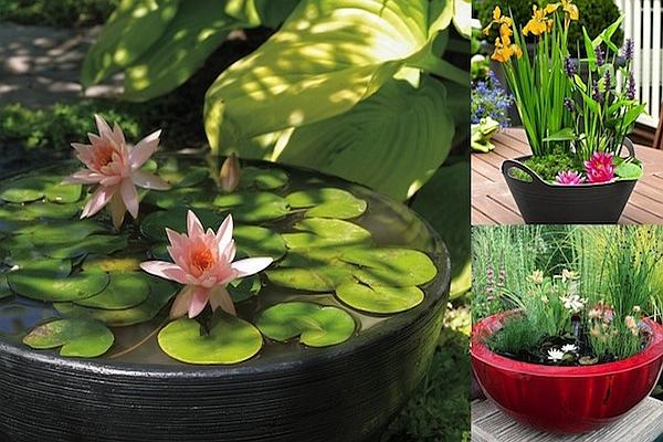 водни лилии онлайн